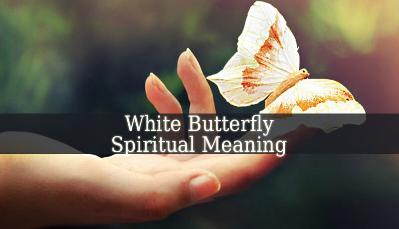white butterfly spiritual meaning